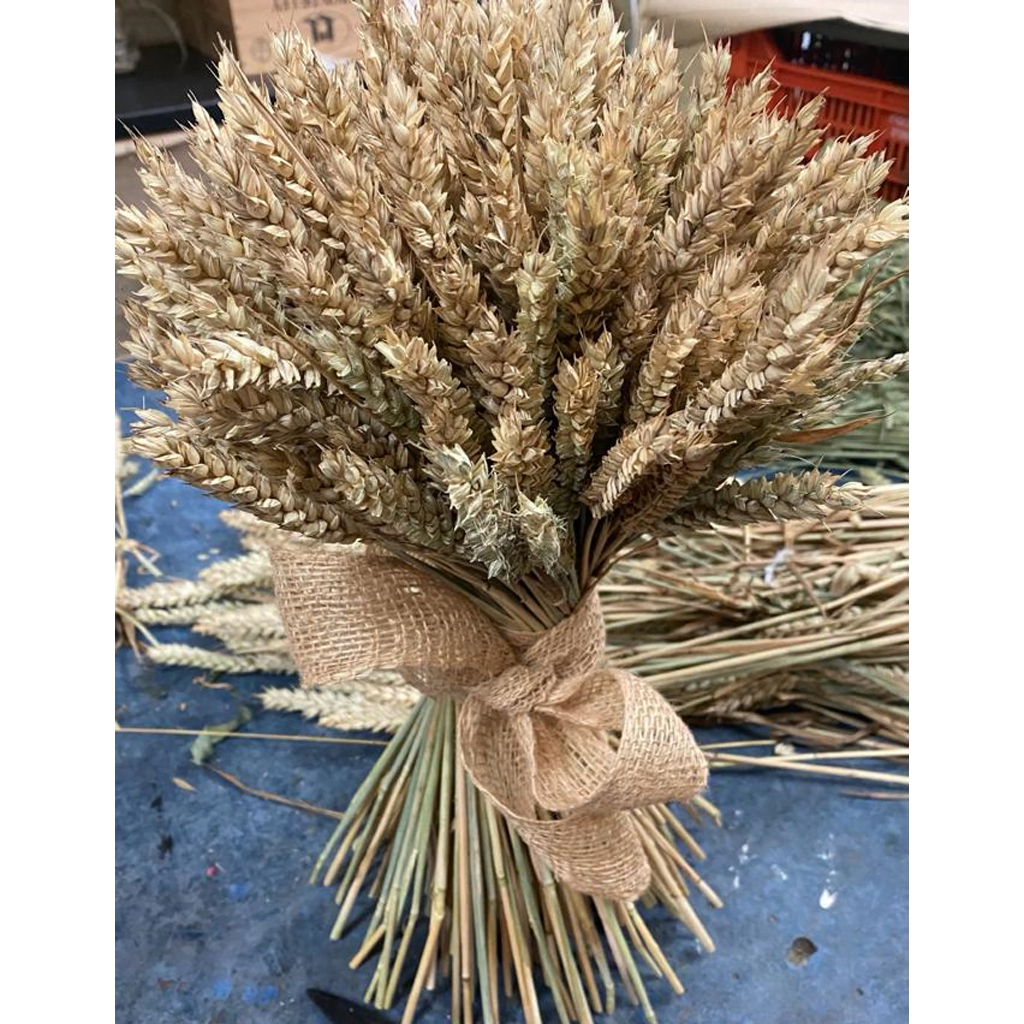Medium Wheatsheaf